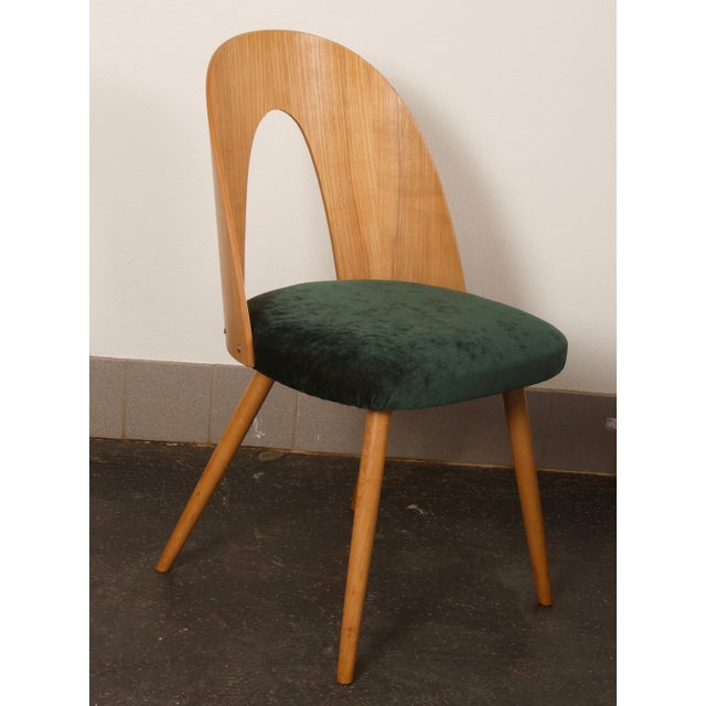 Ash wood with ash veneer, upholstered. Designed by Antonin Suman in the 1960s for Tatra in Czechoslovakia. Upholstery...