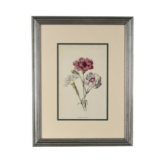 Late 19th Century Antique Framed English Flower Botanical Print For Sale