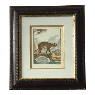 Vintage Natural History Trowbridge Crab Raccoon Framed Print For Sale