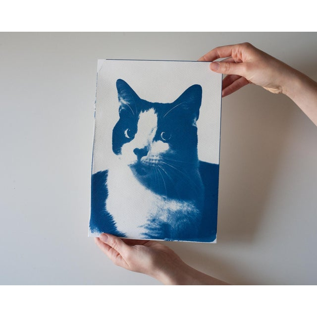 Limited Edition, Cyanotype Print- Cat Portait - Image 4 of 4