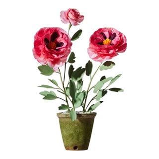 The Green Vase Peony Plant