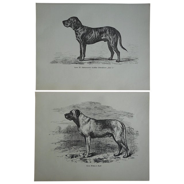 Antique Hunting Dog Engravings - A Pair - Image 1 of 4