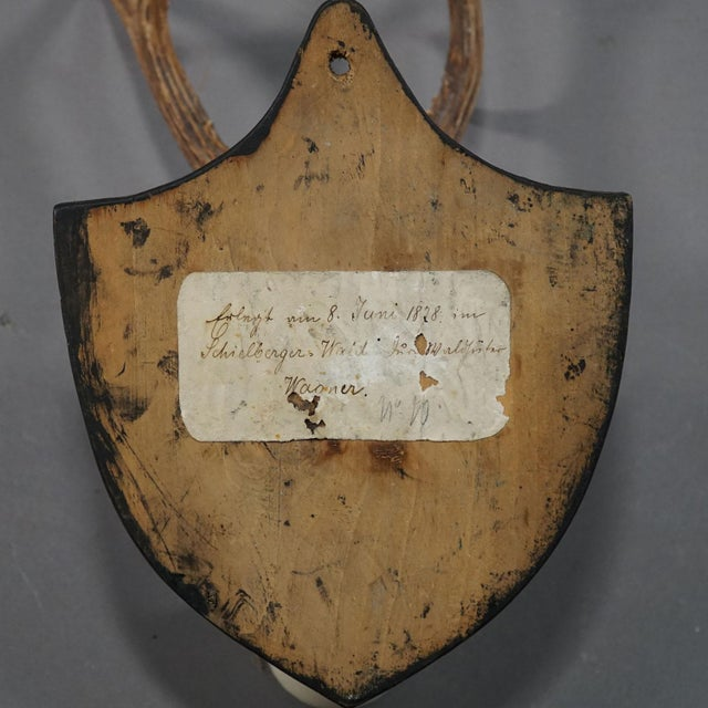 Wood Six Large Antique Deer Trophies on Wooden Carved Plaques Ca. 1870 For Sale - Image 7 of 8