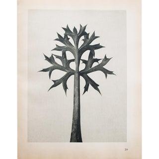 1935 Karl Blossfeldt Two-Sided Photogravure Print N29-30 For Sale