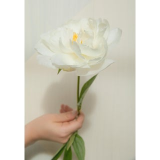Rays: White Peony II, 2020' Contemporary Photograph by Claiborne Swanson Frank, 16x20