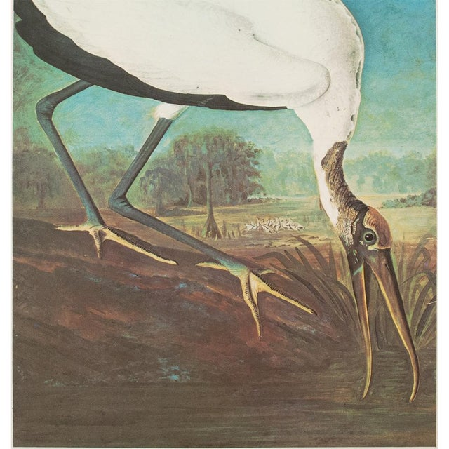 Asian 1966 Cottage Lithograph of Large Wood Ibis by John James Audubon For Sale - Image 3 of 10