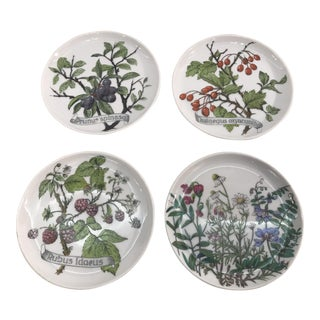 West German Porcelain Botanical Coasters - Set of 4