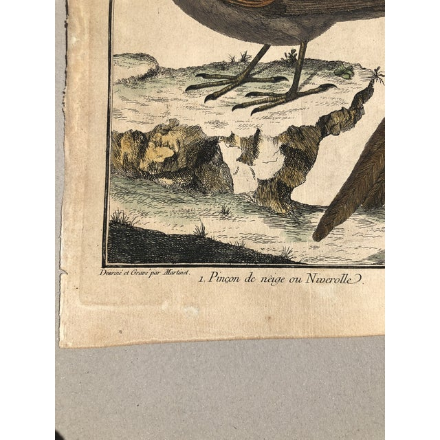 Early 18th Century 18th Century French Matted Bird Engraving by Martinet Featuring a Snow Pincer, a Senegalese Pincer and a Carolina Ortolan For Sale - Image 5 of 13