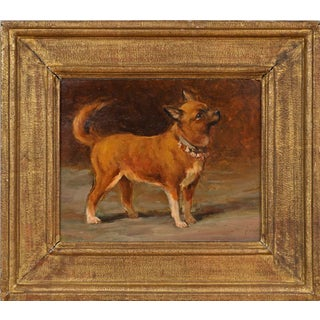 Dog Portrait of a Chihuahua Oil Painting on Board Signed l.r Gaston Noury (French, 1866-1936) For Sale