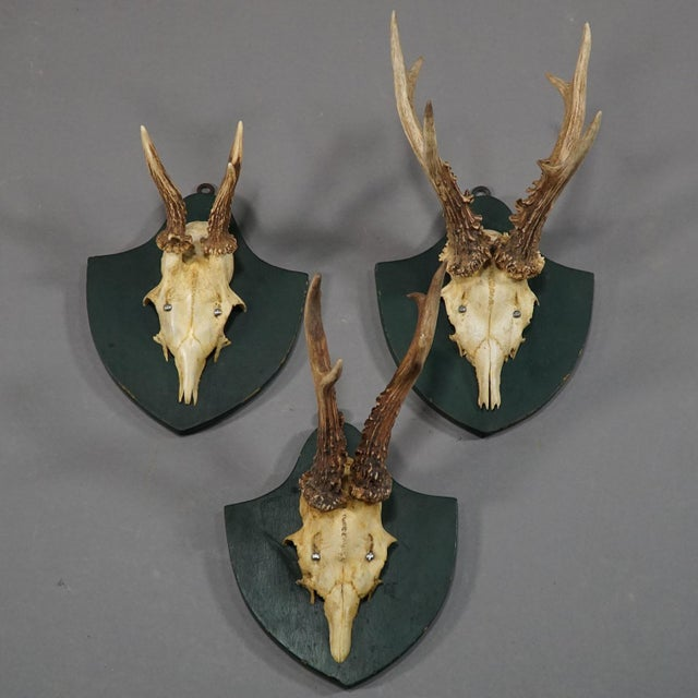 Six Large Antique Deer Trophies on Wooden Carved Plaques Ca. 1860 For Sale - Image 4 of 8