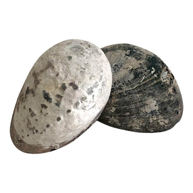 Black & White Abalone Shells - Set of 2 For Sale