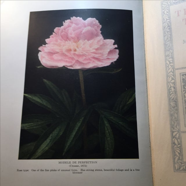 """"""" The Book of the Peony by Harding"""" 1st Edition - Image 2 of 9"""