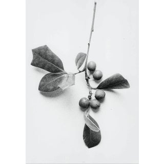 1980s Holly Still lIfe Photograph by Garo For Sale