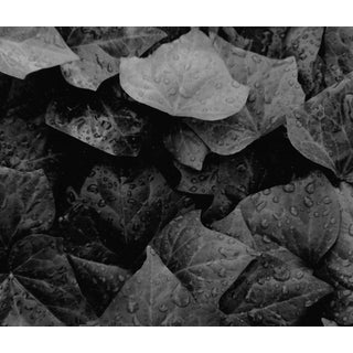 Ivy Black and White Still Life Photo by Garo For Sale