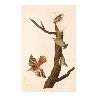 1960s Cottage Print of Brown Creeper and Californian Nuthatch by Audubon For Sale