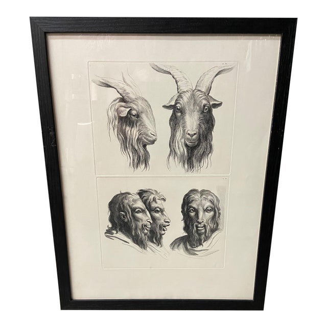 Man as Mountain Goat - Physiognomic Heads Series Framed Illustration by Charles Le Brun For Sale