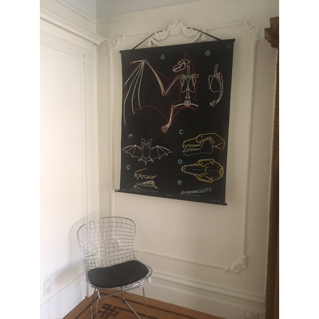 """French Vintage French """"Dr. Auzoux"""" Anatomy Science Poster For Sale - Image 3 of 9"""