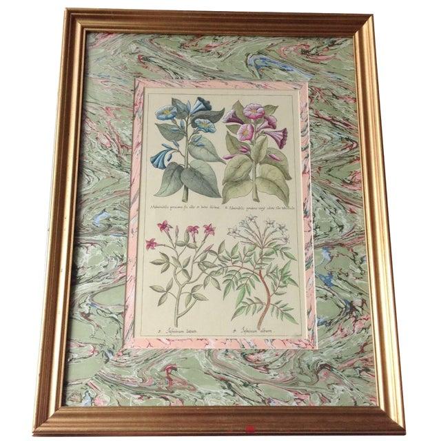 Vintage John Richard Botanical Print - Image 1 of 11