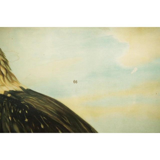 Mid-Century Modern German vintage eagle school poster For Sale - Image 3 of 7
