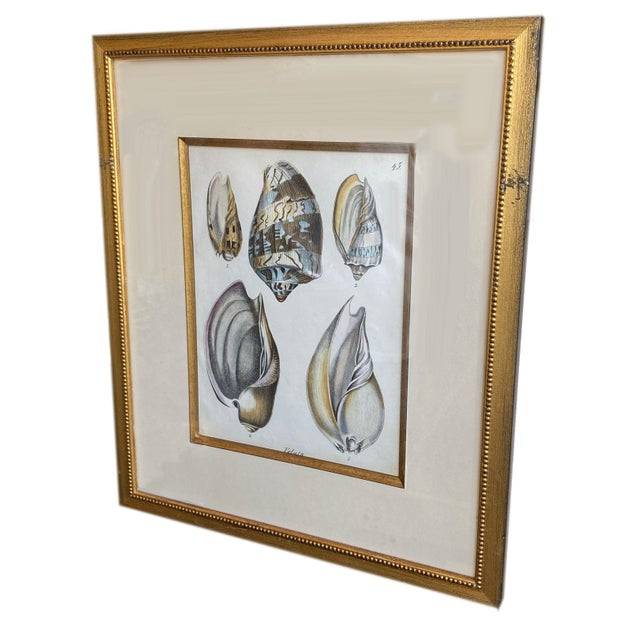 Mid 19th Century Antique Veluta Shell Engraving in Gilt Frame For Sale - Image 5 of 6