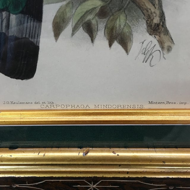 J. G. Koulemans Hand Colored Bird Lithographs - A Pair For Sale - Image 10 of 11