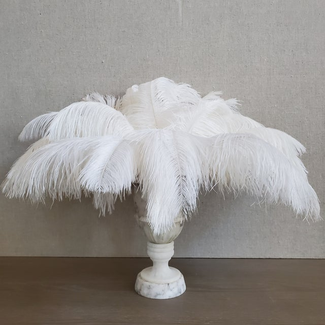 Add a whimsical touch with this 25 piece grouping of naturally shed ostrich feathers. The natural feathers have been...