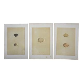 Antique Egg Lithographs-Set of 3-Quail,Pheasant,Partridge For Sale