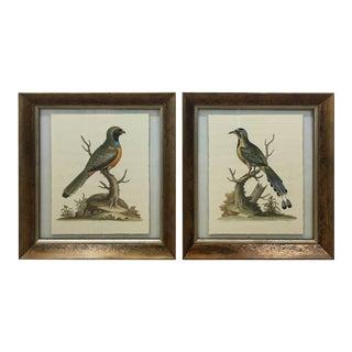Ornithological Prints - a Pair