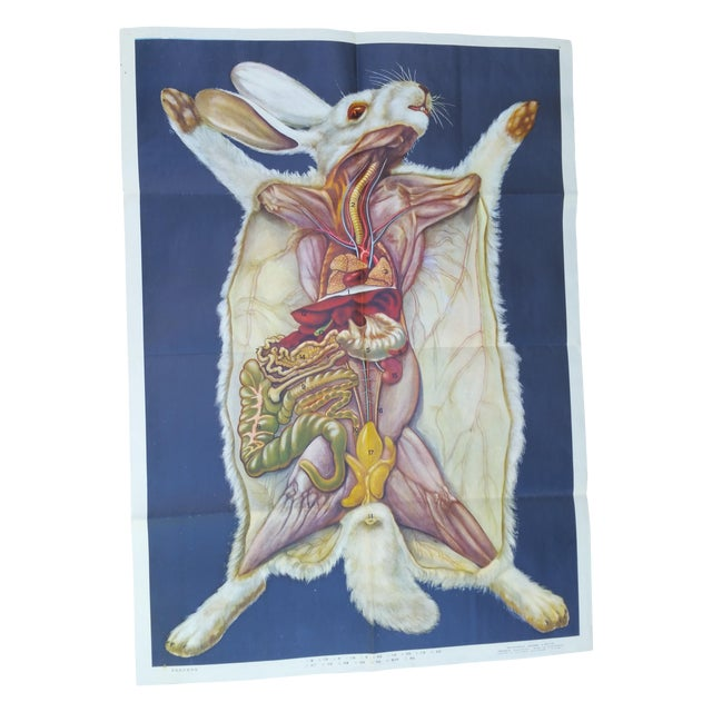 Vintage Anatomy of a Rabbit Poster - Image 1 of 5