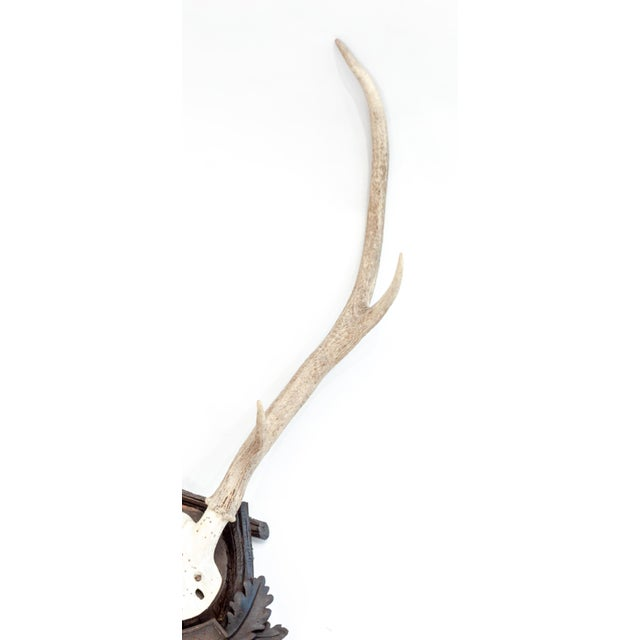 Rustic Mounted Stag Antlers Dated 1896 For Sale - Image 3 of 5