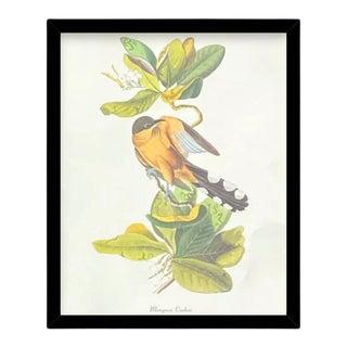 Custom Black Wood Frame of Authentic Vintage John James Audubon Mangrove Cuckoo Bird & Botanical Print For Sale