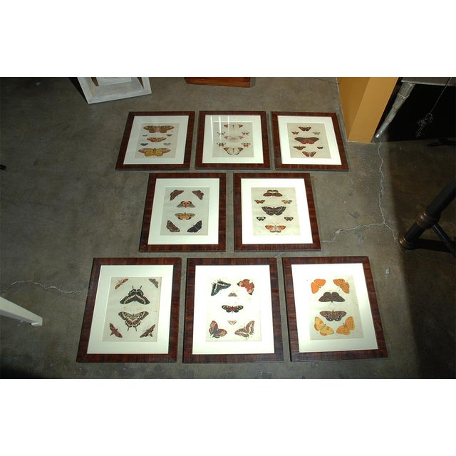 Early 18th Century Antique Butterfly Prints - Set of 8 For Sale - Image 11 of 11