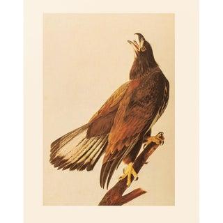 1966 Vintage Cottage Print of Bald Eagle by John James Audubon For Sale