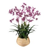 Image of Diane James for Chairish Faux Dancing Orchid in Basket For Sale
