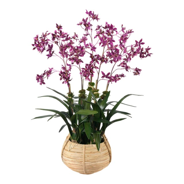 Diane James for Chairish Faux Dancing Orchid in Basket For Sale