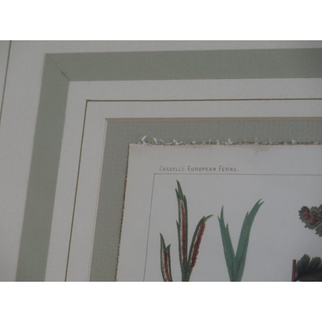 Early 21st Century Vincent Brooks Day & Sons Decorative Lithograph Fern Prints - a Pair For Sale - Image 5 of 13
