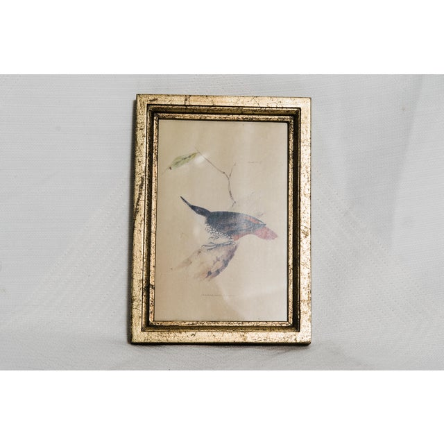 A natural history print of a bird in a distressed gold frame.