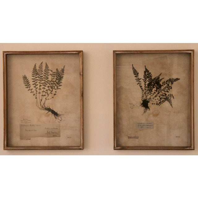 Wood Botanical Prints in Reclaimed Wood Frames - a Pair For Sale - Image 7 of 7