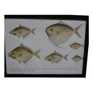 1862 Pieter Bleeker Exotic Fish Prints - Set of 4 Preview
