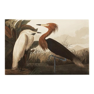 1990s Purple Heron or Reddish Egret by Audubon, Large Cottage Print For Sale
