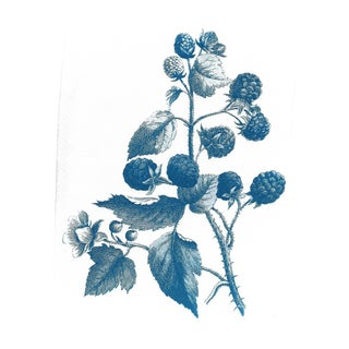 Vintage Wild Berries Botanical Drawing, Limited Serie Cyanotype Print on Watercolor Paper, A4 For Sale
