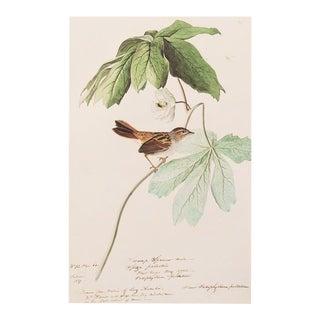 1960s Vintage Audubon Large Swamp Sparrow Lithograph For Sale
