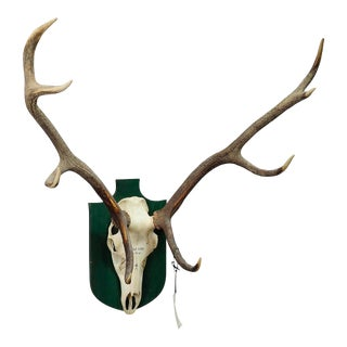 Black Forest Deer Trophy From Salem - Germany, Priel 2000 For Sale