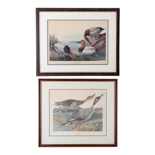 Audubon Canvas Backed Duck and Pin Tailed Duck Vintage Ligthographs - A Pair