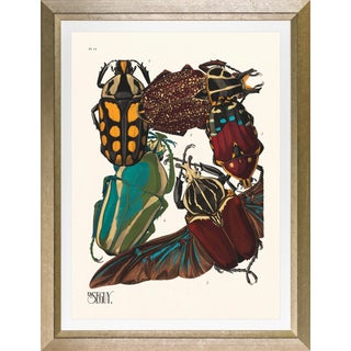 """Framed E. A. Seguy Print, """"Insects"""" Plate No. 11 For Sale"""