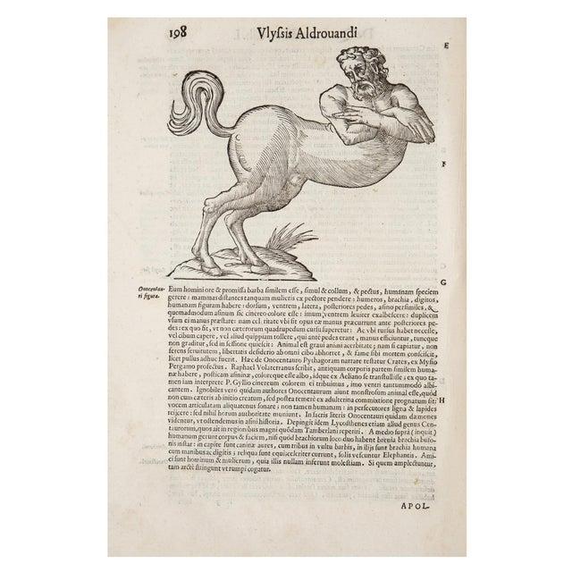 17th Century 17th Century Illustrated Vellum Book, Ulisse Aldrovandi's De Quadrupedibus Solidipedibus For Sale - Image 5 of 7