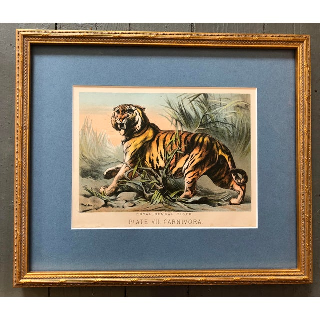 Illustration Gallery Wall Collection 3 Antique Framed Set of Chromolithographs Prints Jungle Themed (Cats & Elephants) For Sale - Image 3 of 6