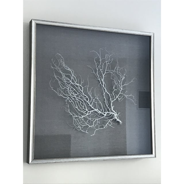 Wjc Designs Framed Sea Fan Coral on Belgian Linen For Sale - Image 4 of 6