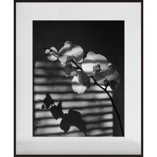 """Phalaenopsis Orchid I"", Contemporary Photograph by Jean Karotkin, Framed For Sale"