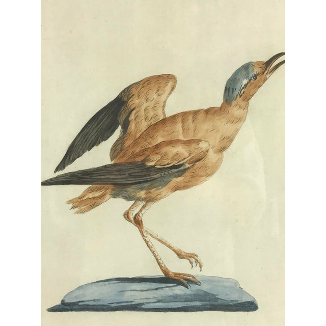 Figurative 18th Century Courser Bird Print Hand Colored Engraving by Saverio Manetti For Sale - Image 3 of 5